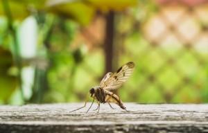 11 Things that Happen When Malaria Strikes